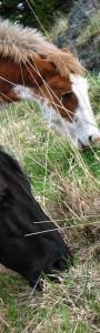 communication télépathique, télépathie, langage animal, soin énergétique animaux