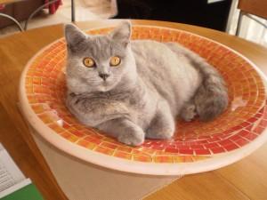 langage animal, parler avec les chats, comprendre les animaux, communication animale, télépathie animale